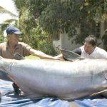 Alimentation : Le poisson Panga, Attention ne pas acheter cette saloperie…