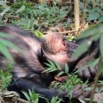 Pour rappel : Les ravages de l'huile de palme sur NOTRE environnement