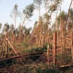 Climat : 1999, deux tempêtes dévastent l'Europe pendant les fêtes de fin d'année
