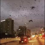 Phénomènes étranges : Des oiseaux au comportement insolite