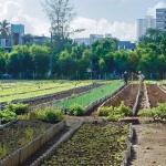 Agriculture : Comment Cuba, suite à l'embargo américain a su nourrir sa population.