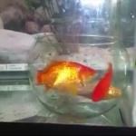 Philosophie : L'allégorie de l'aquarium