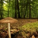 Science et vie : A monde de demain, maison de demain, un parfait exemple pour une vie en symbiose avec son environnement