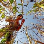 Agriculture et résistance : La guerre des graines et la lute qu'il faut mener contre le dictat des grands semenciers