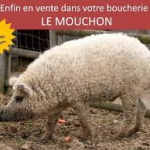"LE ""MOUCHON"" SPIRITUALISTE"