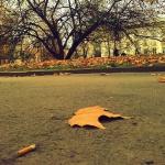 Environnement : Jeter son mégot par terre, pas si anodin
