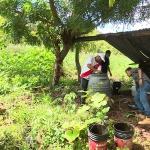 Environnement :  Le Salvador interdit les pesticides chimiques