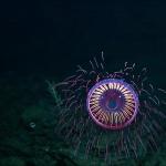 Science & Vie : Quand les abysses nous dévoilent leurs beautés