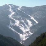 Environnement : Jeux Olympiques d'hiver, 78 hectares de forêt ont été rasés soit plus de 50 000 arbres abattus