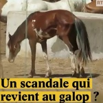 Maltraitance animale : Un scandale qui revient au galop ?