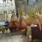 Maltraitance animale : La chaîne de l'horreur !