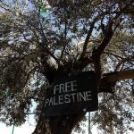 L'image du jour : Free Palestine