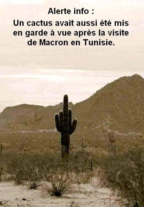 """Résultat de recherche d'images pour """"humour macron  tunisie cactus"""""""