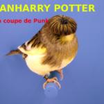Humour : Après la saga Harry Potter voilà comment la Warner va nous en mettre plein la vue