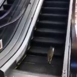 Réseaux sociaux : Un chat qui se trompe d'escalier fait le buzz sur la toile