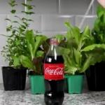 Si la firme Coca-cola devait être frappée par une crise sanitaire sans précédent…