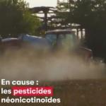 Environnement : Les abeilles continuent à disparaitre drastiquement mais il existe des alternatives citoyennes