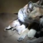 Syrie : Pierre Lecorf, une main tendue aux animaux victimes de la guerre (Une vie reste une vie)