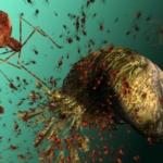 Santé publique : Un virus pour combattre les bactéries résistantes aux antibiotiques