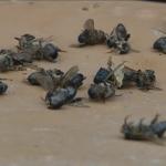Alerte rouge sur l'environnement : 700 ruches mortes en Dordogne fin mars… 3 000 aujourd'hui. Une catastrophe naturelle annoncée