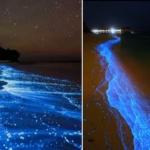 Science & Vie : Quand l'océan devient phosphorescent en Tasmanie