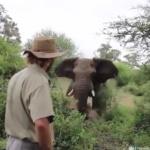 Science & Vie : La nature a tant à nous apprendre. La charge d'un éléphant stoppée par un état de pensée