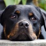 Science & Vie : Quand les animaux nous donnent des leçons d'empathie