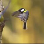 Environnement : Quand la nature se fait la malle