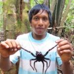 Science & Vie : Venezuela, chasseurs de mygales (Arachnophobes s'abstenir)