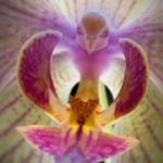 Nature : Ces fleurs ressemblent à tout, sauf à des fleurs !