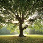Environnement : La voix de Mère Nature et la réponse de la gent humaine