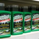 Glyphosate : la firme Monsanto rattrapée par la justice et condamnée pour commercialiser un désherbant potentiellement mortel