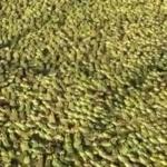 No comment : La ferme aux 10 millions de grenouilles