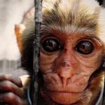 Souffrance animale, la zoochose : Il faut savoir