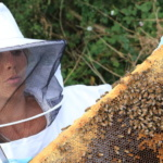 Science & vie : Le miel et les abeilles, plus qu'un métier, une passion