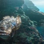 """Découverte : """"Hybrids""""  le court-métrage hallucinant où les poissons ont fusionné avec les déchets"""