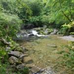 Environnement : La forêt jardinée