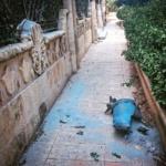 Syrie et Pierre le Corf : Un pays meurtri et l'avenir fait peur !