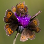 Environnement : La disparition des insectes, une catastrophe silencieuse