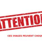 Maltraitance animale : Europe, peste porcine (Bisounours, c'est la douche froide !)