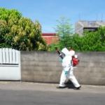 Réunion : Une apicultrice accuse les insecticides de tuer ses abeilles