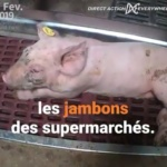 No comment & maltraitance animale : L'enfer sur terre !