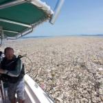 Environnement : Des photographies inquiétantes des Caraïbes montrent une mer de plastique et de polystyrène