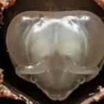 La vidéo du jour : De l'œuf à l'abeille en time-lapse immersif