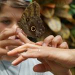 Environnement : Disparition des insectes, la plus importante extinction massive depuis les dinosaures