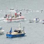 Maltraitance animale : La Norvège va créer sa propre baie destinée au massacre des dauphins
