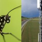 Environnement : LA 5G FAIT CHAUFFER LES ANTENNES DES INSECTES
