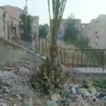 Environnement : L'arbre qui cachait une montagne d'ordures