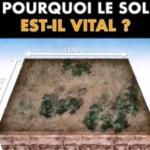 Environnement : Pourquoi le sol est-il vital ?