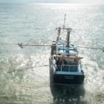 La vidéo du jour : Maltraitance animale, la pêche électrique